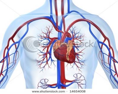 Esperanza para pacientes con insuficiencia cardiaca